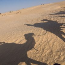 North Africa - camel shadow